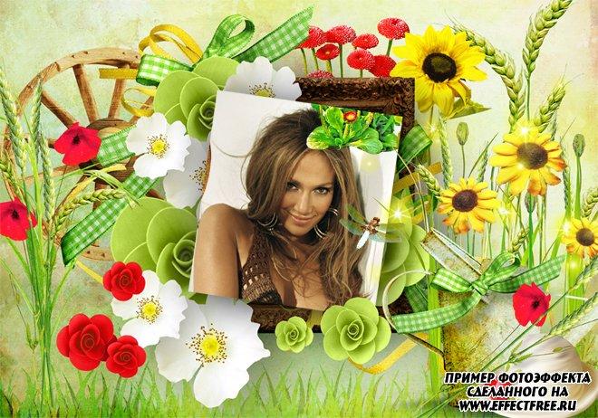 Летняя рамка для фото с полевыми цветами, сделать в онлайн фотошпе