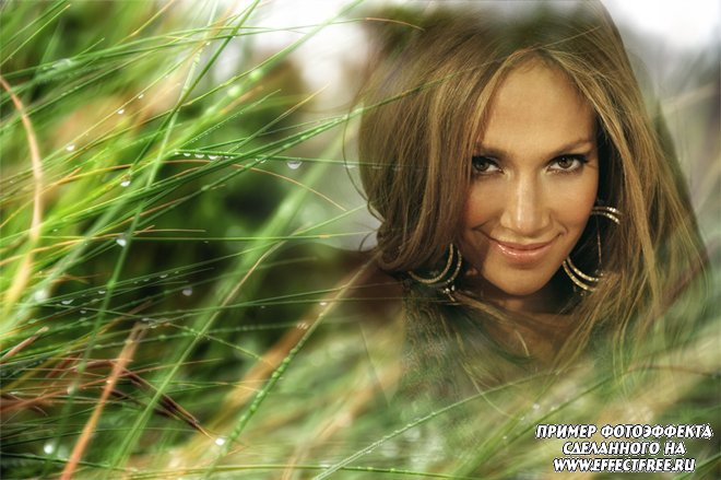 Интересный фотоэффект на фоне травы покрытой утренней росой, сделать онлайн