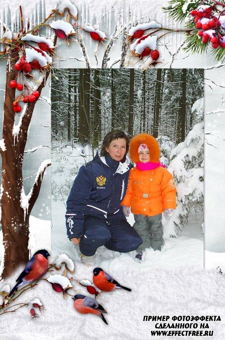 Фоторамка Снегири на белом снегу, вставить фото в рамку онлайн